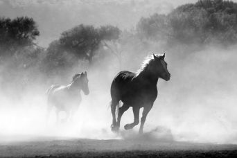 horse-430441__480