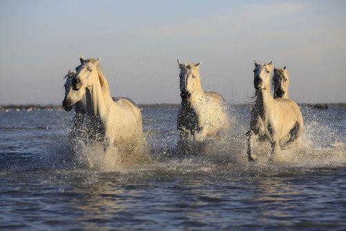 horses-1401707__480