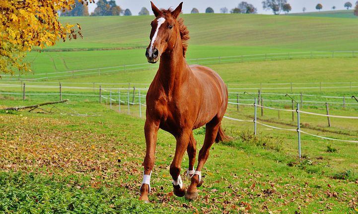 horse-1006378__480