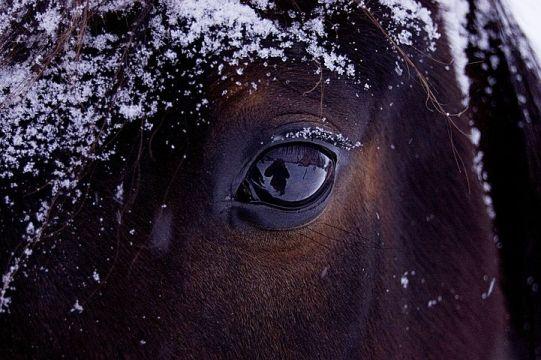 horse-743474__480